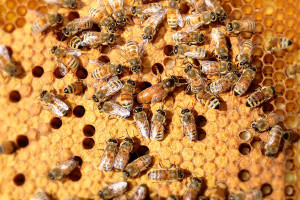 southern_idaho_agriculture_honey_6626