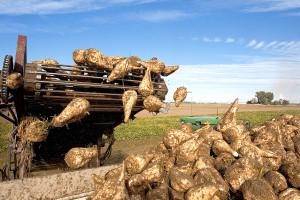 southern_idaho_agriculture_sugar_beets_1576